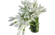 白色花朵 4 1 白色花朵 花卉壁纸