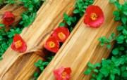 二 春天花卉图片壁纸 Desktop Wallpaper of Spring Flowers 春暖花开 花卉壁纸