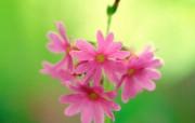 春暖花开之 红色系 花卉壁纸