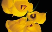 浪漫花卉艺术图片 Desktop Wallpaper of Romantic flowers 典雅花卉艺术摄影 花卉壁纸