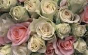 玫瑰花图片 玫瑰花壁纸 Flower Rose Photo Rose Wallpapers 繁花似锦花卉摄影壁纸 花卉壁纸