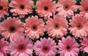 鲜花图片 花卉摄影壁纸 Flower Photos Flower Art 繁花似锦花卉摄影壁纸 花卉壁纸