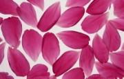 花瓣图片花瓣壁纸 Flower Petals Photos Flower Petals Wallpapers 繁花似锦花卉摄影壁纸 花卉壁纸