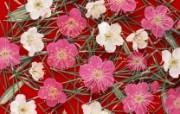 梅花图片梅花壁纸 plum blossom Photos plum blossom Wallpaper 繁花似锦花卉摄影壁纸 花卉壁纸