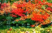 枫叶秋叶 2 35 枫叶秋叶 花卉壁纸