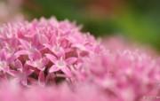花卉市场 高清花卉摄影 1920 1200 第十辑 微距鲜花 微距花卉摄影图片 高清花卉摄影十 花卉壁纸