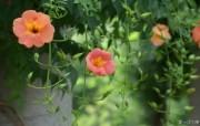 花卉市场 高清花卉摄影 1920 1200 第十辑 花卉市场的鲜花壁纸 高清花卉摄影十 花卉壁纸