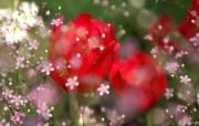 花卉市场 高清花卉摄影 1920 1200 第十辑 花卉展的鲜花摄影图片 高清花卉摄影十 花卉壁纸