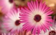 花卉市场 高清花卉摄影 1920 1200 第十辑 Tokyo Flower Show Flower Wallpapers 高清花卉摄影十 花卉壁纸