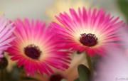 花卉市场 高清花卉摄影 1920 1200 第十辑 Flower Market Flower Photo Wallpapers 高清花卉摄影十 花卉壁纸