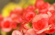 数码相机花卉摄影壁纸 八 Flower wallpapers by Digital Camera Digital Photography 个人花卉摄影壁纸八 花卉壁纸