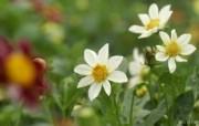 数码相机花卉摄影壁纸 八 野花图片 数码相机拍摄的野花壁纸 个人花卉摄影壁纸八 花卉壁纸