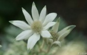 数码相机花卉摄影壁纸 八 鲜花图片 数码相机拍摄的鲜花壁纸 个人花卉摄影壁纸八 花卉壁纸