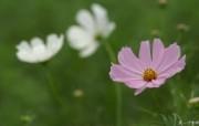 个人花卉摄影壁纸 第五辑 含1920 1200 数码相机拍摄的鲜花图片Flower Photography by Digital Cameras 个人花卉摄影壁纸 第六辑 花卉壁纸