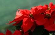 个人花卉摄影壁纸 第五辑 含1920 1200 Flower Wallpaper Flower Photography by Digital Cameras 个人花卉摄影壁纸 第六辑 花卉壁纸