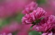 个人花卉摄影壁纸 第五辑 含1920 1200 数码相机花卉摄影桌面 Digital Cameras Flower Photography 个人花卉摄影壁纸 第六辑 花卉壁纸