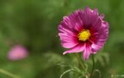 含1920 1200 数码相机花卉摄影图片Flower Photography by Digital Cameras 个人花卉摄影壁纸 第五辑 花卉壁纸