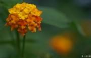含1920 1200 花卉数码摄影桌面Flower Photography by Digital Cameras 个人花卉摄影壁纸 第五辑 花卉壁纸
