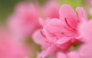 Flower Photography by Digital Cameras Digital Photography 个人花卉摄影壁纸七 花卉壁纸
