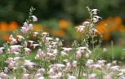 鲜花图片 花卉摄影 数码相机拍摄的花卉壁纸 个人花卉摄影壁纸七 花卉壁纸