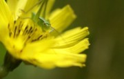 花卉摄影壁纸 Flower photography by Digital Camera 个人花卉摄影集第二辑 花卉壁纸