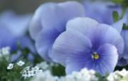 45张 3种尺寸 Flower photography by Digital Camera 个人花卉摄影集第三辑 花卉壁纸