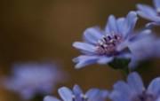 45张 3种尺寸 花卉摄影壁纸 Flower photography by Digital Camera 个人花卉摄影集第三辑 花卉壁纸