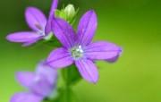 Digital Flower Photography 鲜花花卉摄影壁纸 digital stcok photographs of flowers 个人花卉摄影集第四辑 花卉壁纸