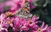 6种尺寸 蝴蝶与花卉摄影壁纸 Professional flower photography 韩国花卉摄影集 花卉壁纸
