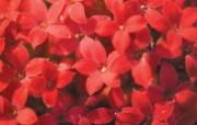 6种尺寸 韩国花卉摄影壁纸 Professional flower photography 韩国花卉摄影集 花卉壁纸