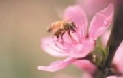 6种尺寸 蜜蜂采花蜜壁纸 Professional flower photography 韩国花卉摄影集 花卉壁纸