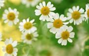 花卉艺术摄影 插花图片 Desktop Wallpaper of Flower Art 花的彩绘淡雅花艺二 花卉壁纸