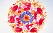 1600花朵背景 1 13 1600花朵背景 花卉壁纸