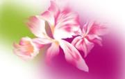 合成花卉 1 14 合成花卉 花卉壁纸