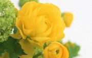 花卉艺术插花艺术欣赏三 花卉壁纸