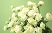 花卉插花艺术图片 Flower Art Desktop Wallpaper 花卉艺术插花艺术欣赏五 花卉壁纸
