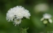 花卉展鲜花摄影壁纸 1920 1200 第十一辑 微距花朵特写 微距花卉图片 1920 1200 花卉展鲜花摄影十一 花卉壁纸