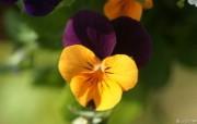 花卉展鲜花摄影十一 花卉壁纸