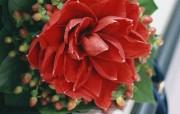 1280 1024 婚礼鲜花图片 Desktop Wallpaper of Wedding flowers 婚礼的花卉祝福的花饰 花卉壁纸