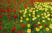 宽屏鲜花特写 9 18 宽屏鲜花特写 花卉壁纸