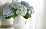 宽屏鲜花特写 花卉壁纸