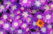 宽屏鲜花特写 10 11 宽屏鲜花特写 花卉壁纸