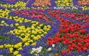 宽屏鲜花特写 10 9 宽屏鲜花特写 花卉壁纸