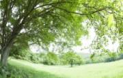 绿色草地 3 18 绿色草地 花卉壁纸