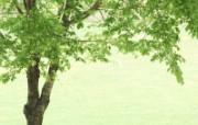 绿色草地 2 18 绿色草地 花卉壁纸
