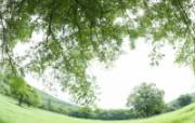 绿色草地 3 17 绿色草地 花卉壁纸