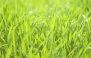 绿色草地 3 16 绿色草地 花卉壁纸