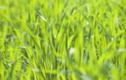绿色草地 3 15 绿色草地 花卉壁纸