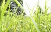 绿色草地 3 12 绿色草地 花卉壁纸