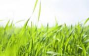 绿色草地 3 11 绿色草地 花卉壁纸